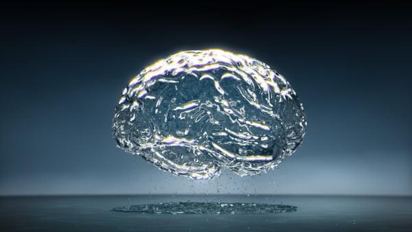 Enigmas del Cerebro: Es necesario o no ?