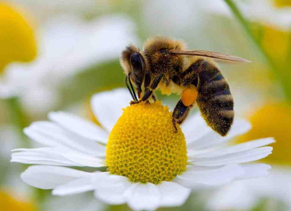 """Continúa en crecimiento """"La masiva extinción de insectos"""""""