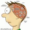 Diez claves para entender cómo funciona el cerebro masculino
