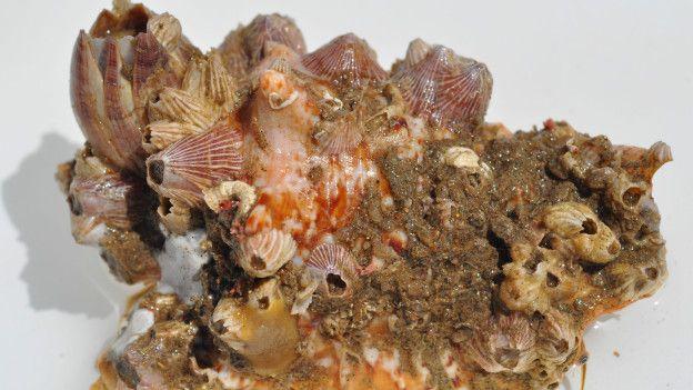 Encuentran Coral de 1000 Kilómetros en Pleno Amazonas Delta