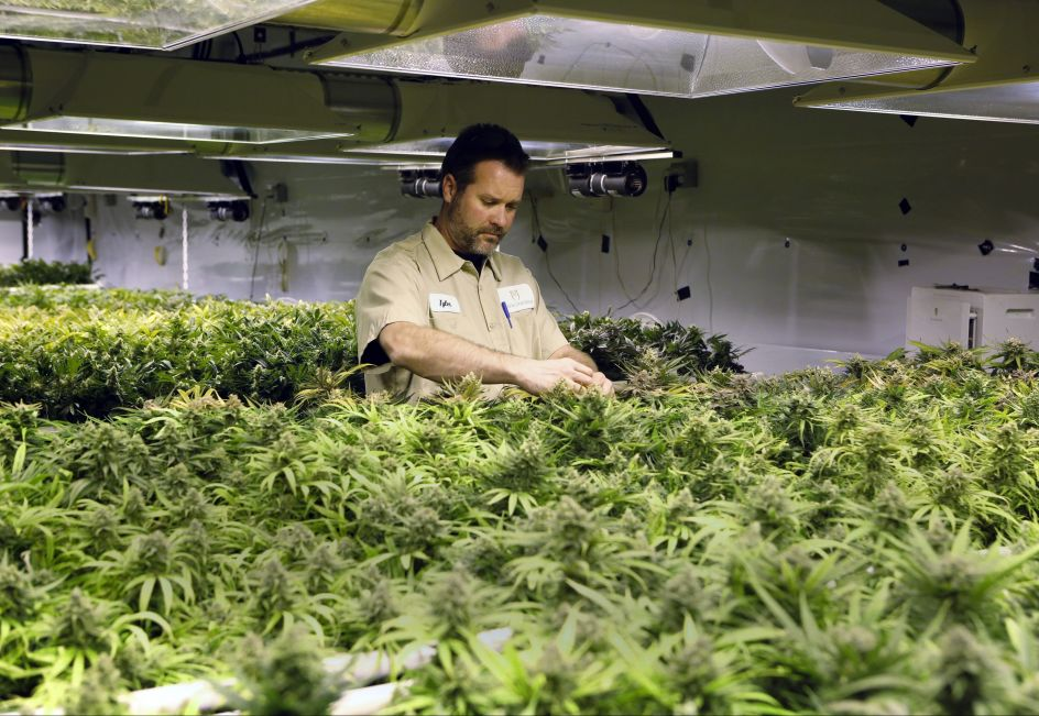 Alaska se une a Colorado y a Washington: Marihuana Legal