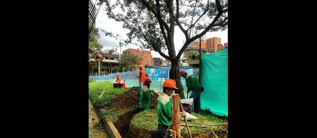 Metroplus: Inminente muerte de los primeros árboles