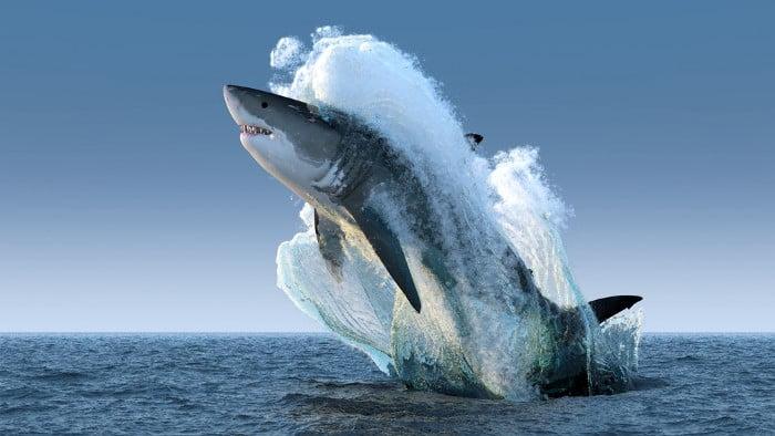 Tiburones en Colombia: Queda TOTALMENTE prohibidos pescarlos !!!