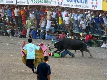 Fallo del Consejo de Estado es sobre corralejas, no sobre corridas de toros: magistrado