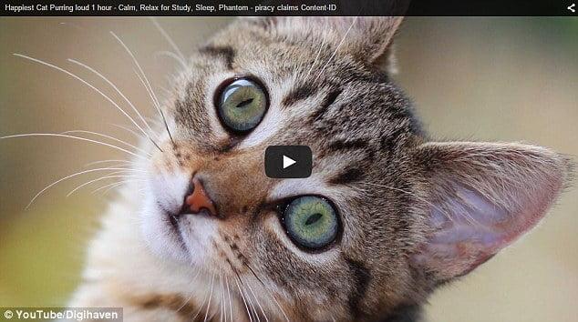 Algo está mal: YouTube acusa a un gato de violar derechos de autor