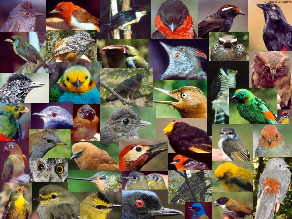 El 90% de las aves de Arauca, Boyacá, Casanare, Meta y Caquetá ya no están allí debido al cultivo de palma.