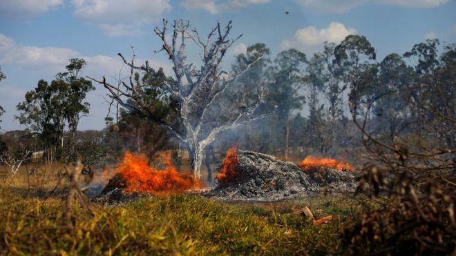 AMAZONAS: Imágenes reales del colosal incendio en el pulmón del planeta