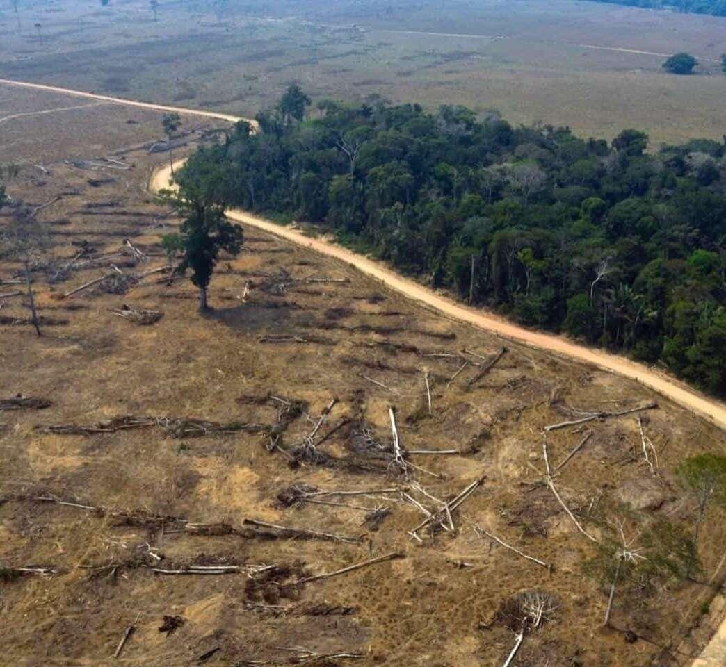 Deforestación en la Amazonía sería financiada por firmas E.E.U.U.