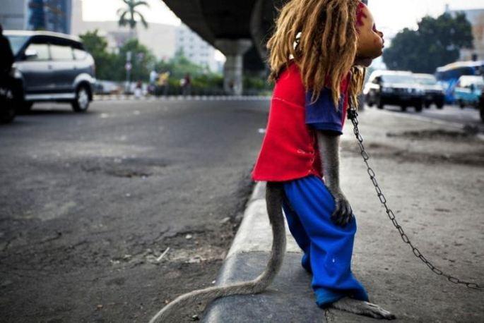 Creepy Indonesian street monkeys 8 PERTURBADORES MONOS ENMASCARADOS MENDIGAN EN INDONESIAsin categoria