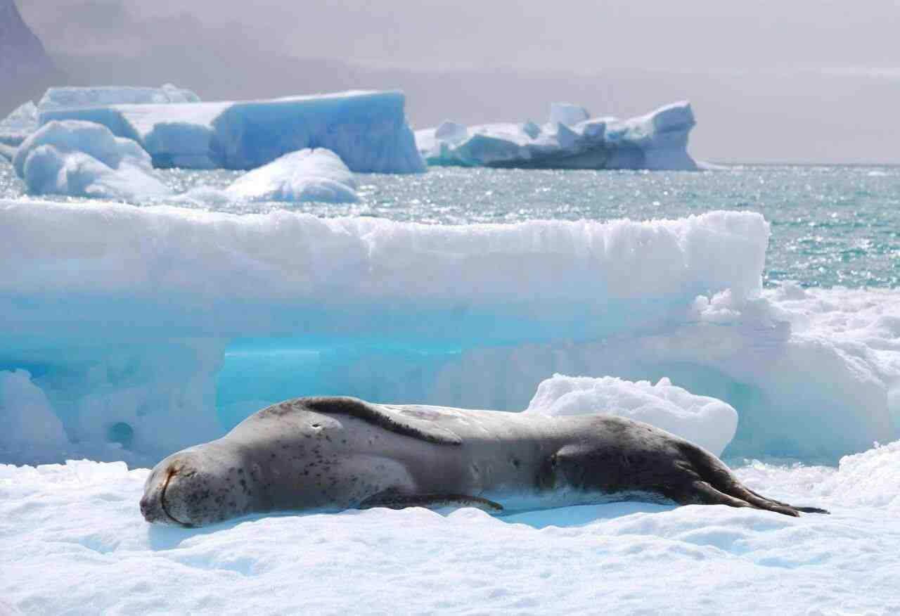 Guardaparques Nacionales Antártida 06