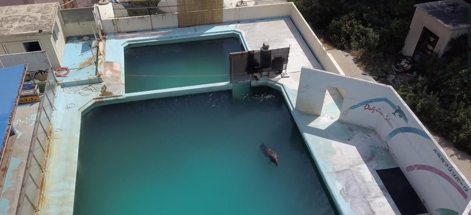 Se murió Honey, el delfín Japones del Acuario abandonado en Choshi