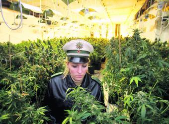 Marihuana en invernadero_Efe_1