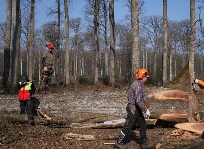 Doloroso: Francia busca reconstruir Notre Dame usando 2 mil árboles de más de 200 años de antigüedad