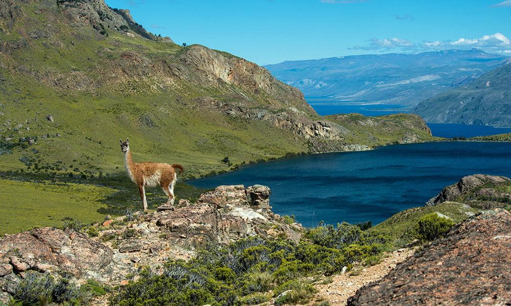 El 21% del territorio chileno es reserva ambiental, Colombia cuenta con un 14% de su territorio protegido