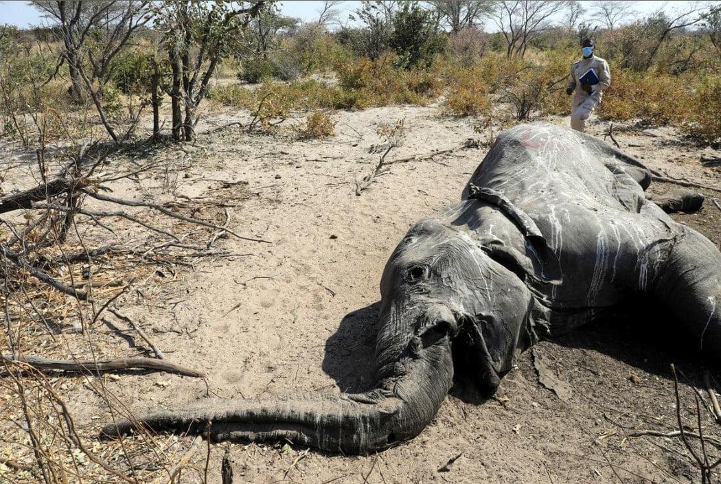 Botswana encuentra más elefantes muertos, dice que los resultados de las pruebas deben presentarse esta semana