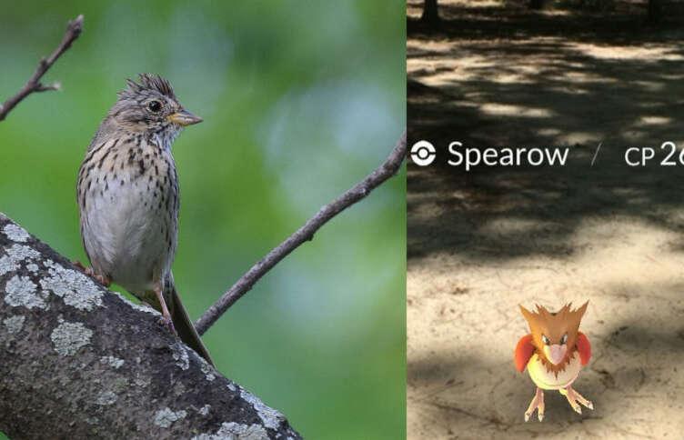 Spearow 860x484