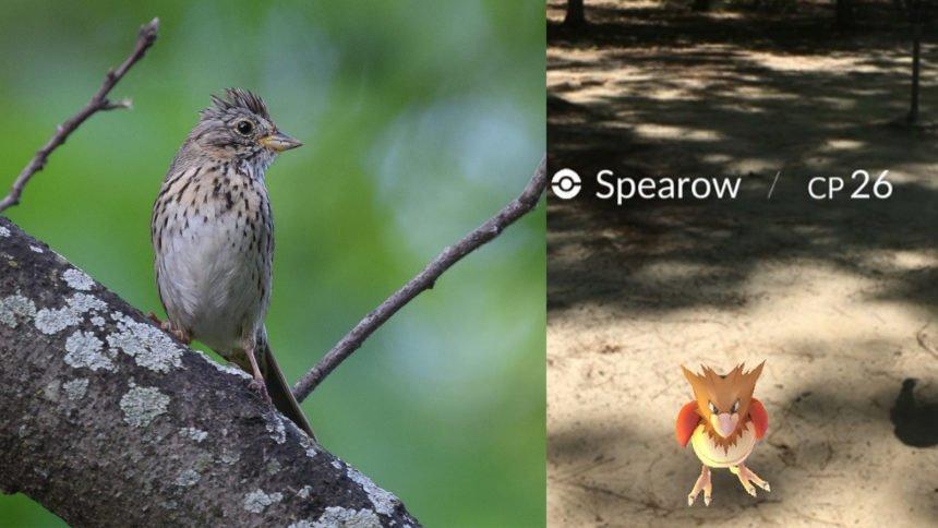 EBird: El app que reconoce pájaros en vez de Pokemones