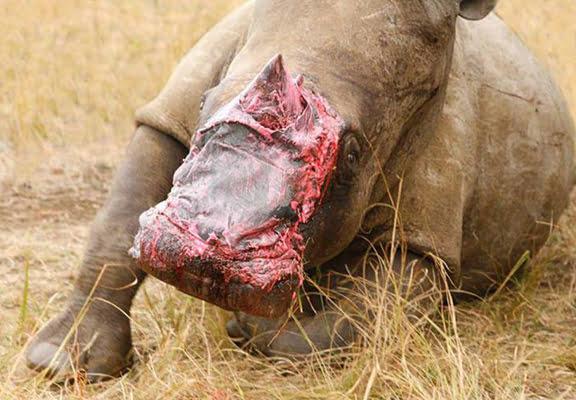 UNILAD rhino skin WEB5