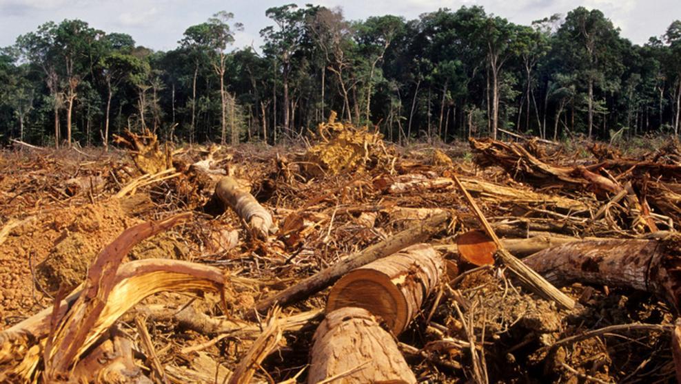 """El Amazonas llegó al 17% de deforestación: Se aproxima el punto de """"no retorno"""""""