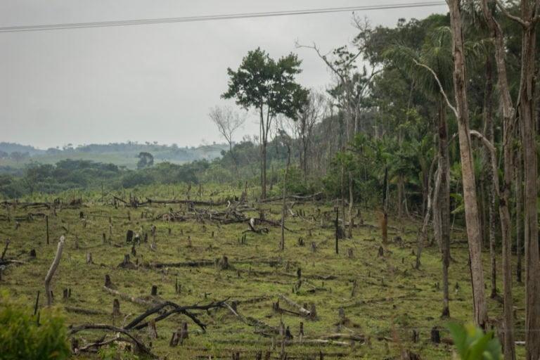 Descubre los cinco desafíos ambientales que quedaron pendientes para este 2021 en Colombia