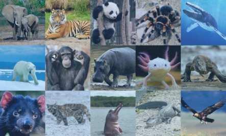 """Científicos advierten que estamos en una """"era irreversible de extinción masiva"""""""