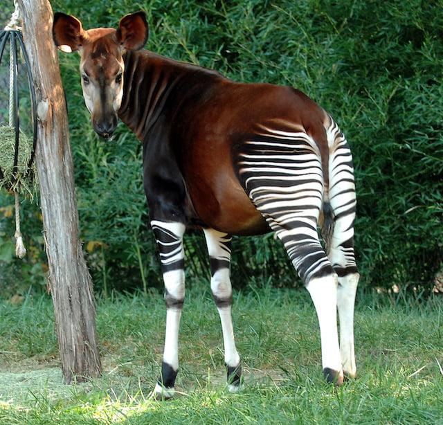 Bizzare Animal Creatures That Actually Exist