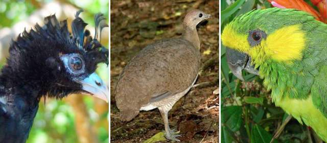 aves-en-peligro-antioquia-640x280-25052012