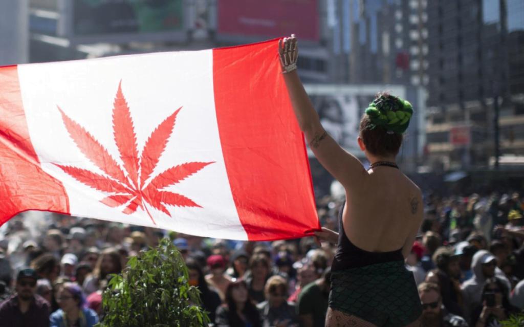 El senado canadiense votara por la legalización de la marihuana recreativa en todo el país