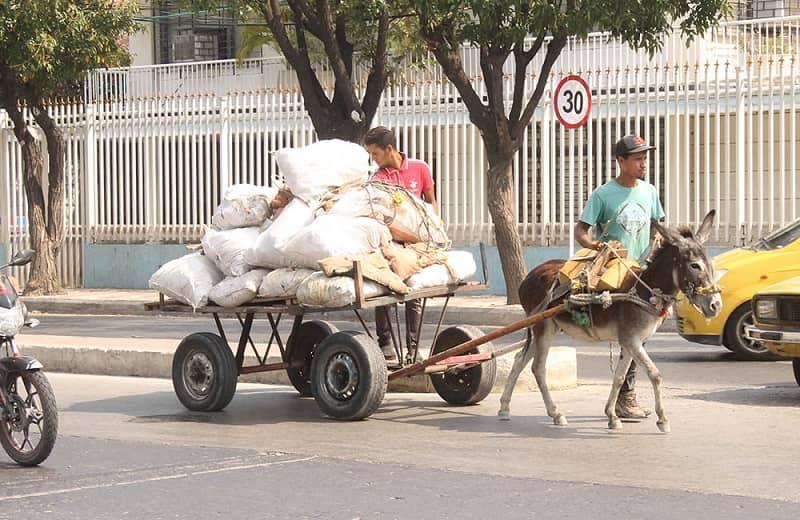 ¡Es oficial! Colombia prohíbe vehículos de tracción animal