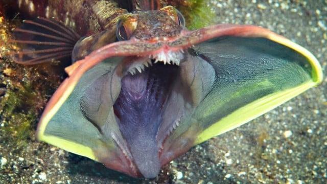criaturas-marinas16