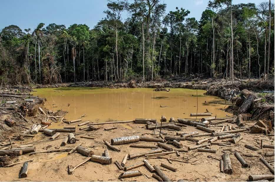 En un año Colombia deforestó un área tan grande como Bogotá