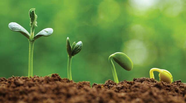 eazy_grow_lights_Plantsgrowinginstages_RGB_Web