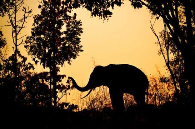 La ciencia afirma que el mundo está al borde de una nueva extinción masiva de especies