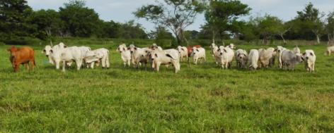 Queda solo 35 % de bosques en Antioquia debido a la tala de arboles