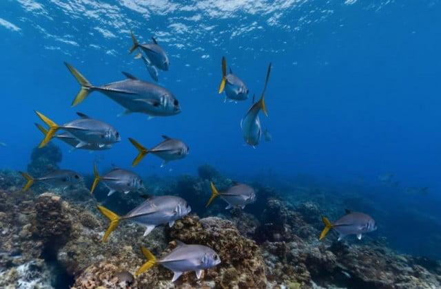 Google Fish View