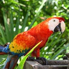 En peligro 346 especies de animales colombianos por tráfico ilegal