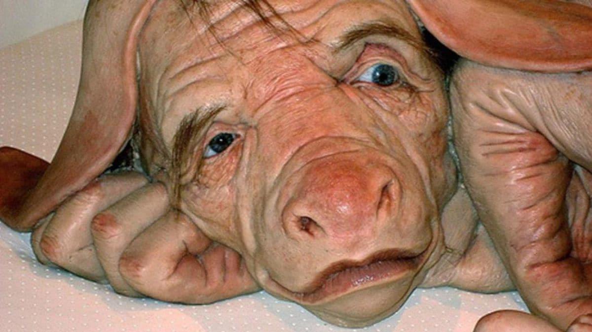 Fue creado un hibrido entre humanos y cerdos para cultivar órganos ¡Futuros artificiales!