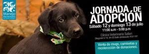 Este Sábado y Domingo Jornada de Adopción de perros y gatos (sector Puerta del Norte - Bello)