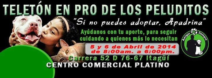 Este Sábado y Domingo Gran Teleton en pro de los animales sin un hogar (AMIGOS POR SIEMPRE Cl 59 55 b 24, Itagüi)