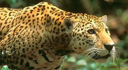 Costa Rica cambia sus zoológicos por parques botánicos