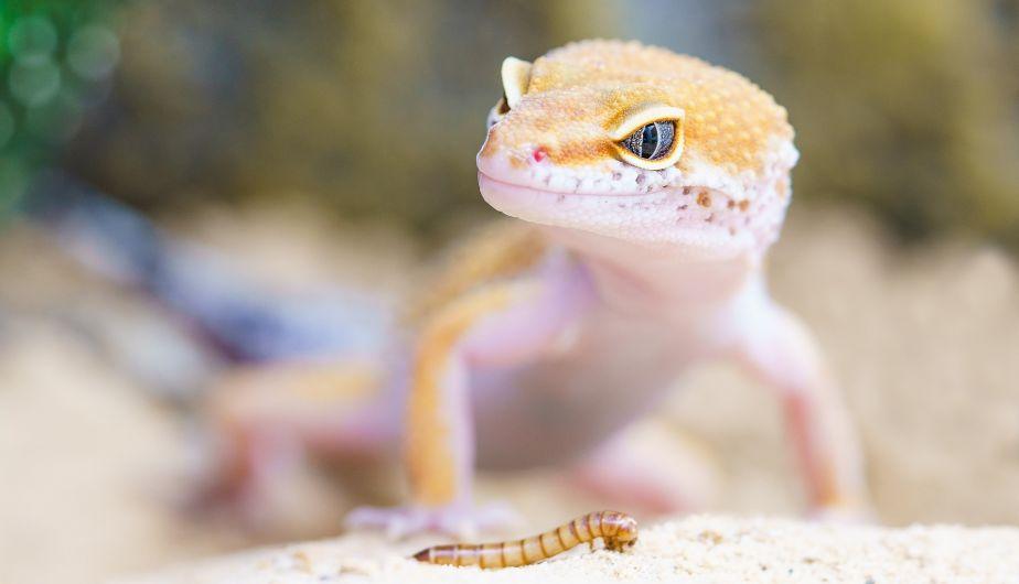 Futuros Artificiales: Cómo en Jurassic Park modificamos la genética de reptiles