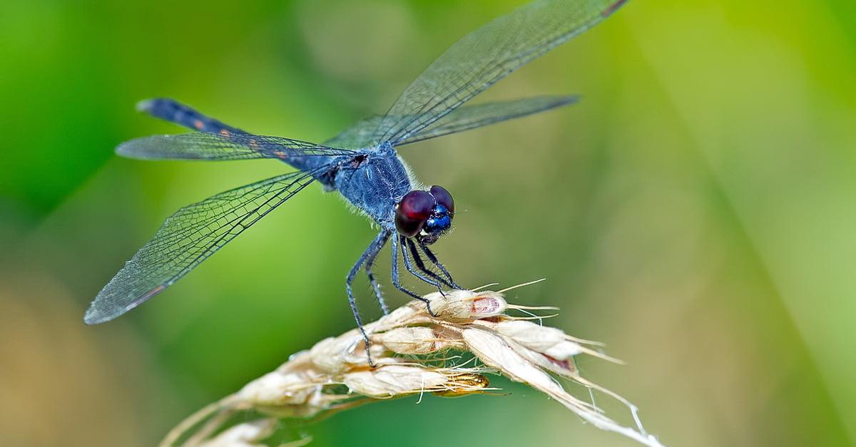 Los insectos se están reduciendo en todo el planeta.