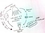 life-cycle2