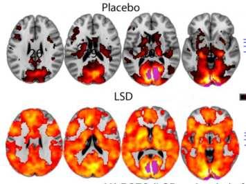 Actualidades sobre el LSD