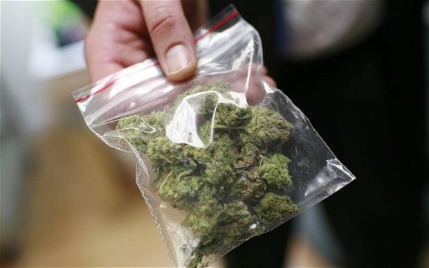 Cómo diferenciar la marihuana de los cárteles de la de los productores locales