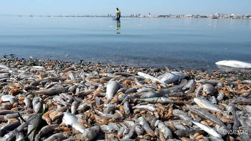 Productos ganaderos y agrícolas causan mayor mortandad de peces en Mar Menor