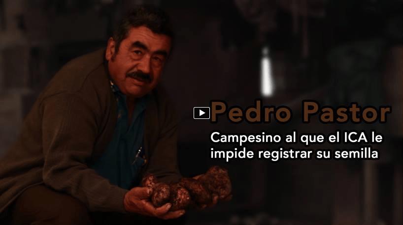 Conoce la historia de Don Pastor, el campesino al que el ICA no le permite registrar su semilla de papa.