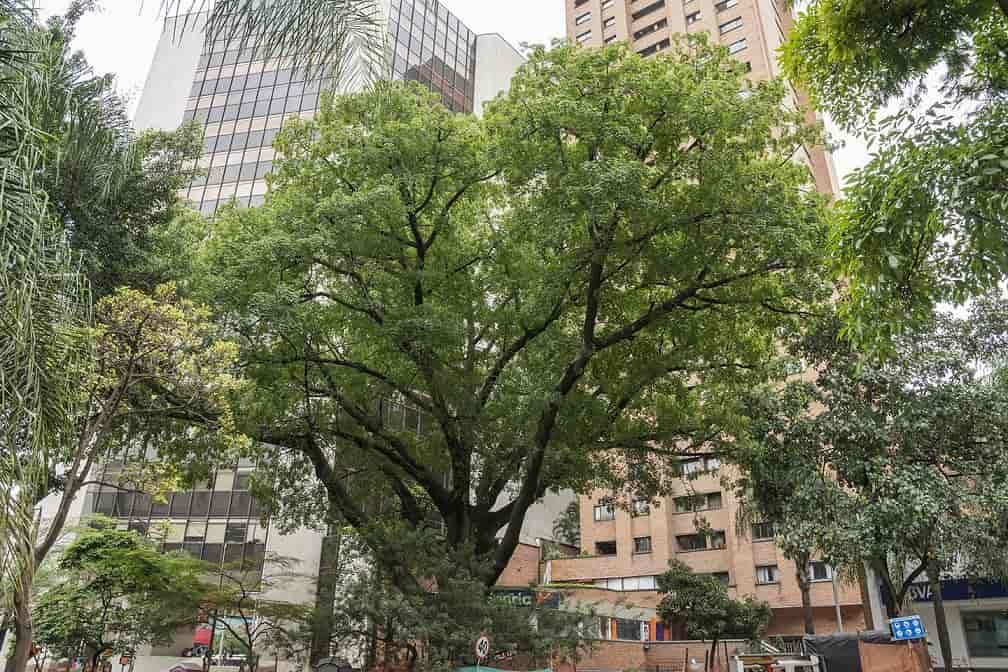 Esto pasaría si cada habitante de la tierra siembra un árbol