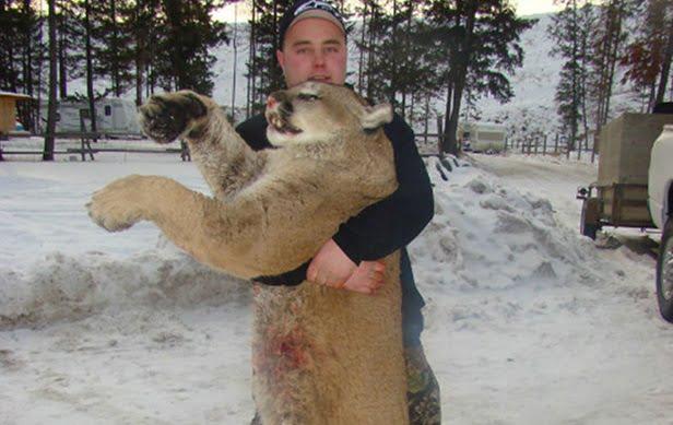 Oficialmente extinto el puma del este de Norteamérica