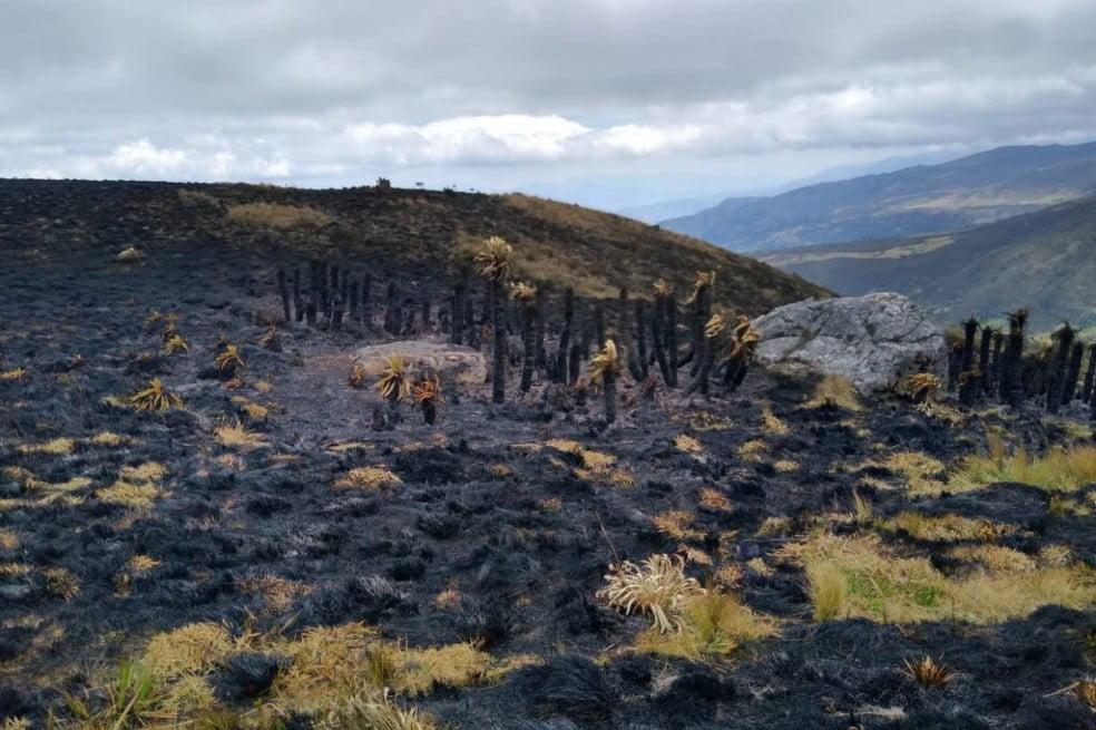 Denuncian quema de frailejones en paramo de Boyacá